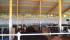 landplan_bayern_jungvieh-stall_15-2