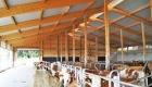 landplan_bayern_jungvieh-stall_15-3