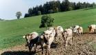 landplan-bayern_jungviehstall_planung_bau_landwirtschaft2015-075 (1)