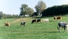 landplan-bayern_jungviehstall_planung_bau_landwirtschaft2015-075 (3)