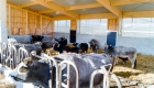 landplan-bayern_jungviehstall_planung_bau_landwirtschaft2015-075 (5)
