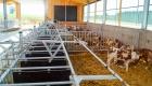 landplan-bayern_kaelberstall_planung_bau_landwirtschaft2015-053
