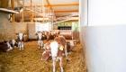 landplan-bayern_kaelberstall_planung_bau_landwirtschaft2015-097 (4)