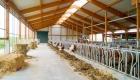 landplan-bayern_milchviehhaltung_milchviehstall_planung_bau_landwirtschaftA 2014-017 (2)