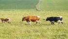 landplan-bayern_reitanlage_rindermast_mutterkuhhaltung_planung_bau_landwirtschaft2017-015 (3)
